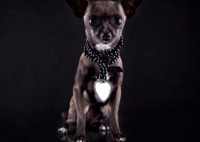 Dierenportret, imirafoto, hondenfotografie