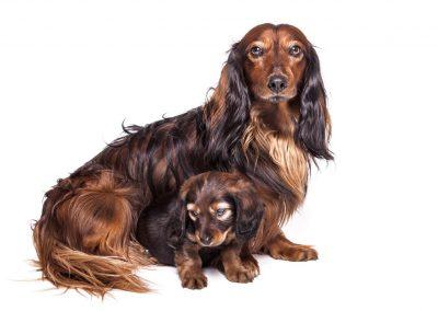 dierenportret, hondenfotografie, hondenportret, imirafoto