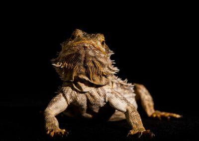 dierenportret, imirafoto, dierenfotograaf, reptielfotograaf