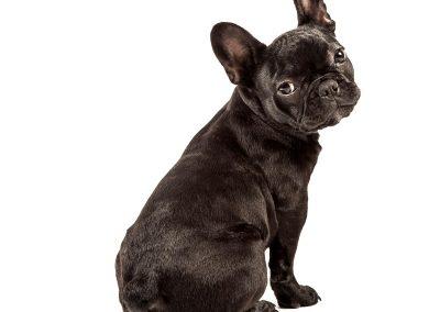 hondenfotografie, hondenfotograaf, dierenportret, dierenfotograaf, imirafoto