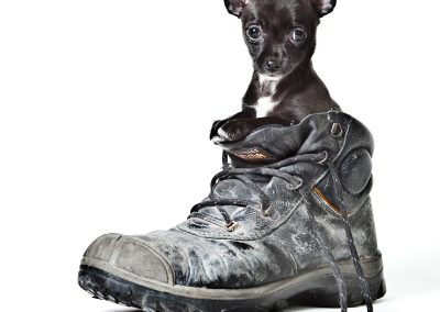 hondenfotografie, hondenfotograaf, hondenportret, dierenportret, dierenfotografie, dierenfotograaf, imirafoto