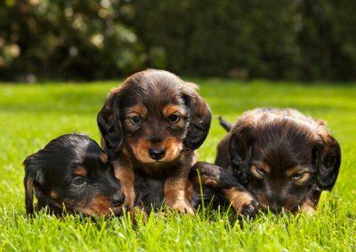 dierenfotograaf, dierenportret, dierenfotografie, imirafoto puppyfotografie