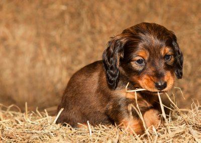 puppyfotograaf, dierenportret, dierenfotograaf, hondenfotograaf, hondenfotografie, imirafoto