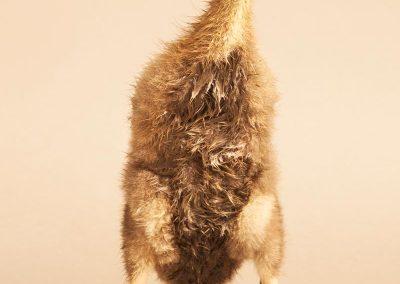 dierenfotograaf, dierenportret, imirafoto