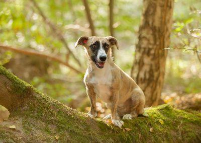 imirafoto, hondenportret, hondenfotografie