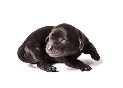 dierenportret, dierenfotografie, hondenfotograaf, hondenportret,imirafoto