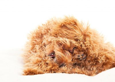 hondenfotografie, dierenportret, imirafoto, dierenfotograaf, hondenfotograaf
