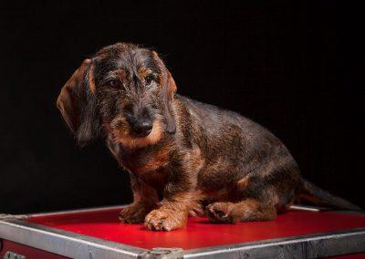 hondenfotograaf, dierenportret, hondenfoto, imirafoto