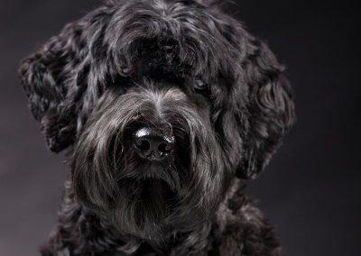 hondenfotografie, hondenfotograaf, imirafoto