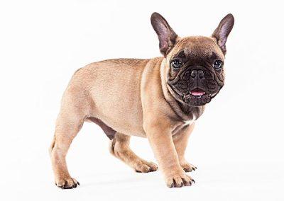 hondenfotografie, hondenportret, hondenfotograaf, imirafoto