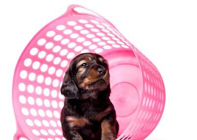 hondenfotograaf, hondenportret, dierenportret, imirafoto