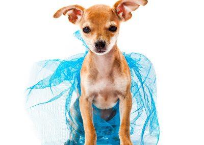 dierenfotografie, hondenportret, imirafoto
